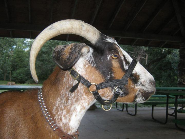 Parker Spotted Goats  Home  Facebook